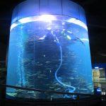 klar akrylcylinder stor fiskktank för akvarier eller havspark