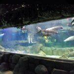 Skräddarsydd lyxdesign undervattens Tjocka akrylpaneler Akvariefönster Glasskiva