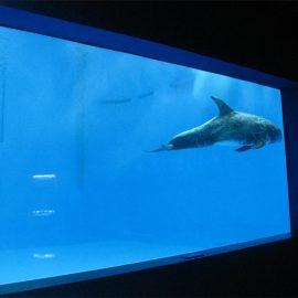 högkvalitativt stort akryl akvarium / pool fönster undervattens tjocka fönsterark