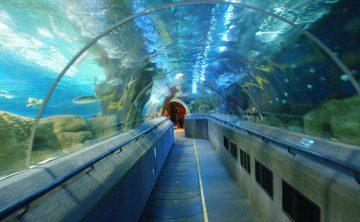 Akryl tunnel