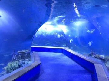 Klart pmma akryl Stor plastik tunnel av akvarium