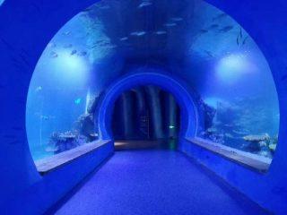 Högklart stort akryl tunnel akvarium av olika former