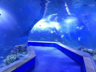transparent akrylglas Tunnel akvarium